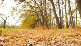 Feuilles de jaune de forêt d'automne l'appareil-photo avance Mouvement lent banque de vidéos