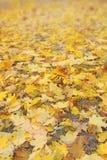 Feuilles de jaune sur l'herbe sèche Fond d'automne Image libre de droits