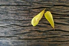Feuilles de jaune sur le fond en bois Image libre de droits