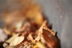 feuilles de jaune sur le trottoir Images stock