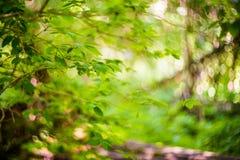 Feuilles de jeunes dans la forêt photos libres de droits