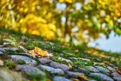 Feuilles de l'automne sur le bord de la route photos libres de droits