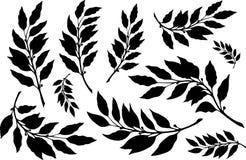 Feuilles de lauriers avec l'ensemble de silhouette de branches illustration stock
