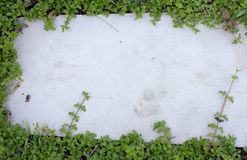 Feuilles de lierre sur le plancher de brique Photo libre de droits