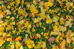 Feuilles de Mapple en beau parc d'automne photographie stock