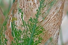 Feuilles de marantaceae de l'eau d'automne Image libre de droits