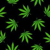 Feuilles de marijuana sur un fond noir Images stock
