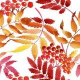 Feuilles de modèle de viburnum dans un style d'aquarelle Images stock