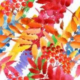 Feuilles de modèle de viburnum dans un style d'aquarelle Photos stock
