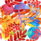 Feuilles de modèle de viburnum dans un style d'aquarelle Images libres de droits
