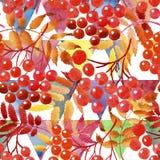 Feuilles de modèle de viburnum dans un style d'aquarelle Photos libres de droits