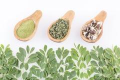Feuilles de Moringa et graines - moringa oleifera Images stock