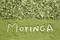 Feuilles de Moringa et poussière - moringa oleifera image libre de droits