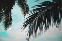 Feuilles de noix de coco Images libres de droits