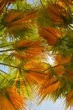 Feuilles de palmier Photographie stock libre de droits