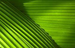 Feuilles de palmier Photo libre de droits