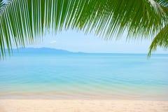 Feuilles de palmier au-dessus de plage de luxe photographie stock libre de droits