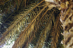 Feuilles de palmier, backgound tropical photos stock