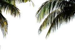 Feuilles de palmier d'isolement sur le fond blanc photographie stock libre de droits