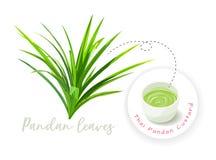 Feuilles de Pandan et crème anglaise cuite à la vapeur pandan illustration libre de droits