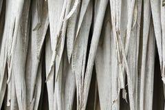 Feuilles de paume de paume sèches en nature photo stock