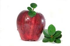 feuilles de pomme et ours de nounours Photos stock