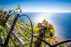 Feuilles de raisin dans le vignoble sur la mer de fond dans le village de Nocelle - côte d'Amalfi image libre de droits