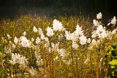 Feuilles de Reed en rivière d'automne Photographie stock