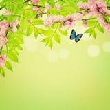 Feuilles de ressort et fleurs d'amande Photographie stock