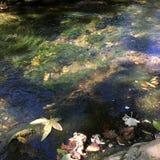 Feuilles de rivière Photos libres de droits
