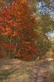 Feuilles de rouge en automne Photographie stock