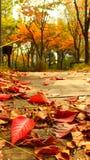 Feuilles de rouge en automne images libres de droits
