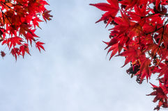 Feuilles de rouge en automne photos stock