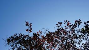Feuilles de rouge et ciel bleu Images stock