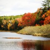 Feuilles de rouge et d'orange en automne Photo libre de droits