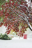 Feuilles de rouge et de vert dans la neige Photos stock