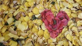 feuilles de rouge sous forme de coeur Photos libres de droits
