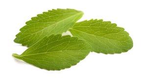 Feuilles de Stevia photos libres de droits