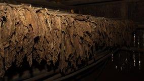 Feuilles de tabac dans le dessiccateur images stock