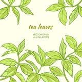 Feuilles de thé Image stock