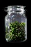 Feuilles de thé faites maison saines dans le conteneur en verre photographie stock libre de droits