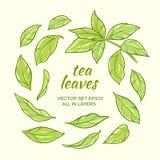 Feuilles de thé réglées Illustration de Vecteur