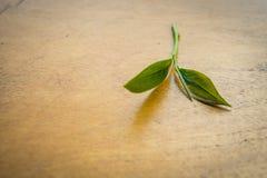 Feuilles de thé vertes fraîches Photo stock
