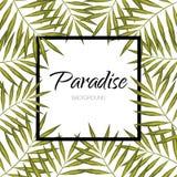 Feuilles de vecteur de paradis Bannière de palmier Aloha fond exotique de cadre Photographie stock