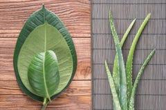 Feuilles de Vera d'aloès sur la table en bois Image stock