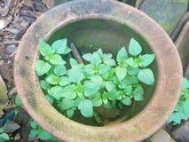 Feuilles de vert à l'arrière-plan de pot photographie stock libre de droits