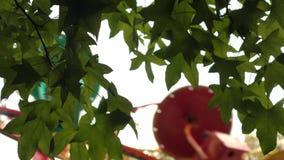 Feuilles de vert, été avec un carrousel clips vidéos