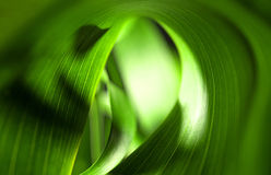 Feuilles de vert Image stock