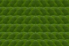 Feuilles de vert.  Image libre de droits