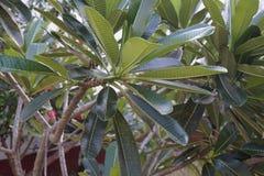 Feuilles de vert, Afrique Image stock